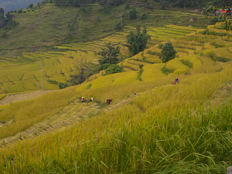 village-to-village-homestay-trek