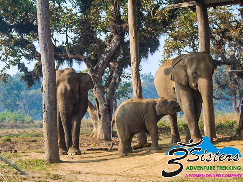 chitwan-jungle-safari-3-nights-4-nights