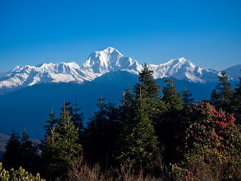 Himalayan Sunrise Trek (Ghorepani (Poon Hill)  Ghandruk)