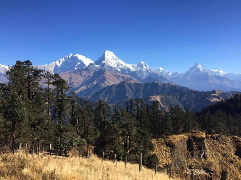 Yak, Yak, Yak Nepal Trek ( Nangi  Khopra )